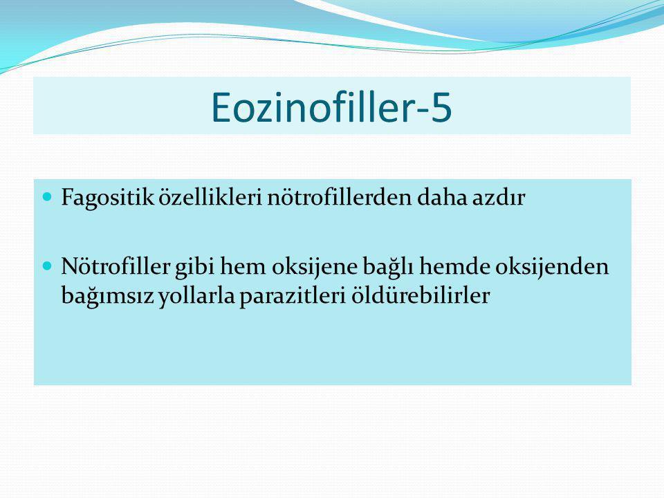 Eozinofiller-5 Fagositik özellikleri nötrofillerden daha azdır Nötrofiller gibi hem oksijene bağlı hemde oksijenden bağımsız yollarla parazitleri öldü