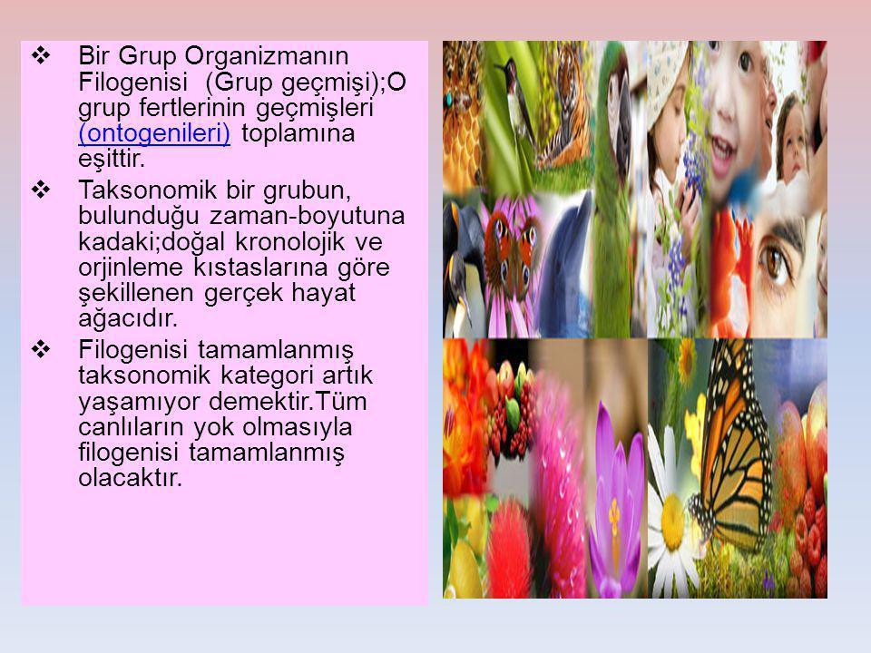  Bir Grup Organizmanın Filogenisi (Grup geçmişi);O grup fertlerinin geçmişleri (ontogenileri) toplamına eşittir. (ontogenileri)  Taksonomik bir grub