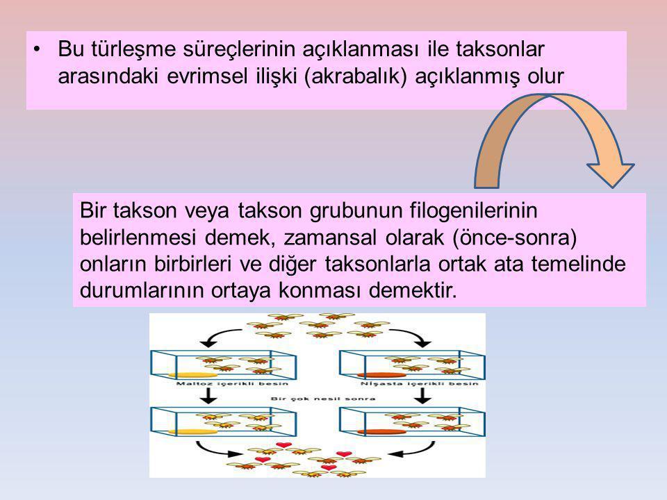 Bu türleşme süreçlerinin açıklanması ile taksonlar arasındaki evrimsel ilişki (akrabalık) açıklanmış olur Bir takson veya takson grubunun filogenileri