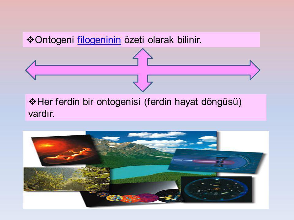  Ontogeni filogeninin özeti olarak bilinir.filogeninin  Her ferdin bir ontogenisi (ferdin hayat döngüsü) vardır.