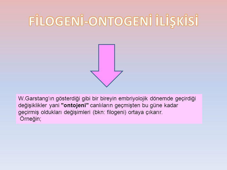 W.Garstang'ın gösterdiği gibi bir bireyin embriyolojik dönemde geçirdiği değişiklikler yani