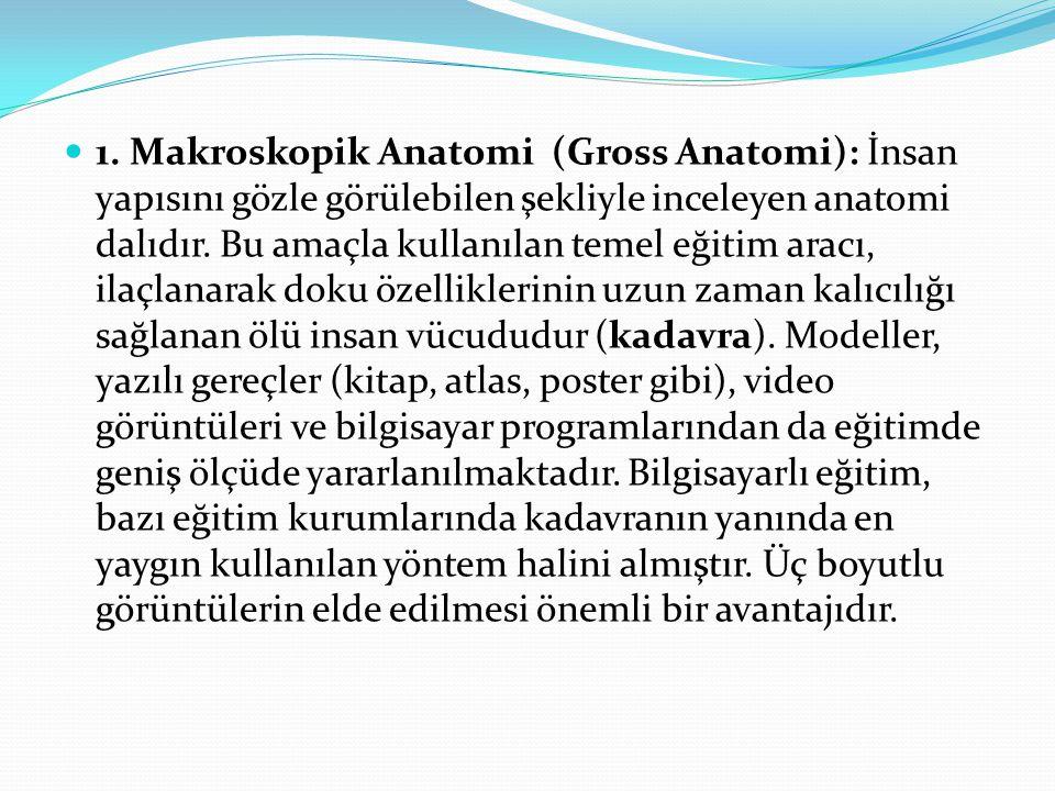 1. Makroskopik Anatomi (Gross Anatomi): İnsan yapısını gözle görülebilen şekliyle inceleyen anatomi dalıdır. Bu amaçla kullanılan temel eğitim aracı,