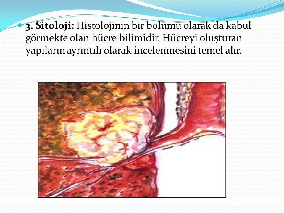 3. Sitoloji: Histolojinin bir bölümü olarak da kabul görmekte olan hücre bilimidir. Hücreyi oluşturan yapıların ayrıntılı olarak incelenmesini temel a