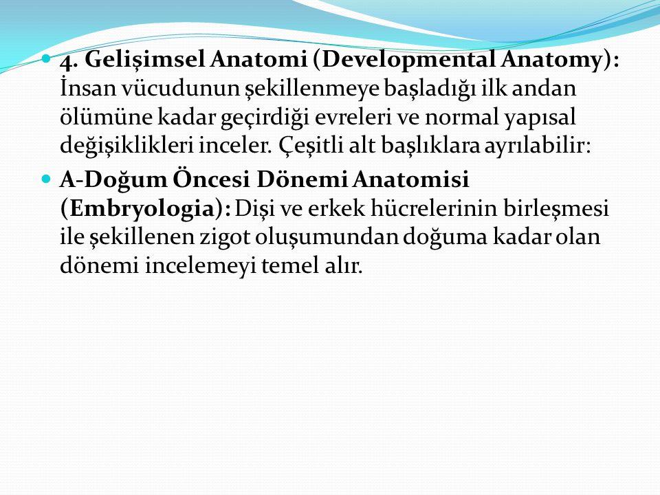 4. Gelişimsel Anatomi (Developmental Anatomy): İnsan vücudunun şekillenmeye başladığı ilk andan ölümüne kadar geçirdiği evreleri ve normal yapısal değ