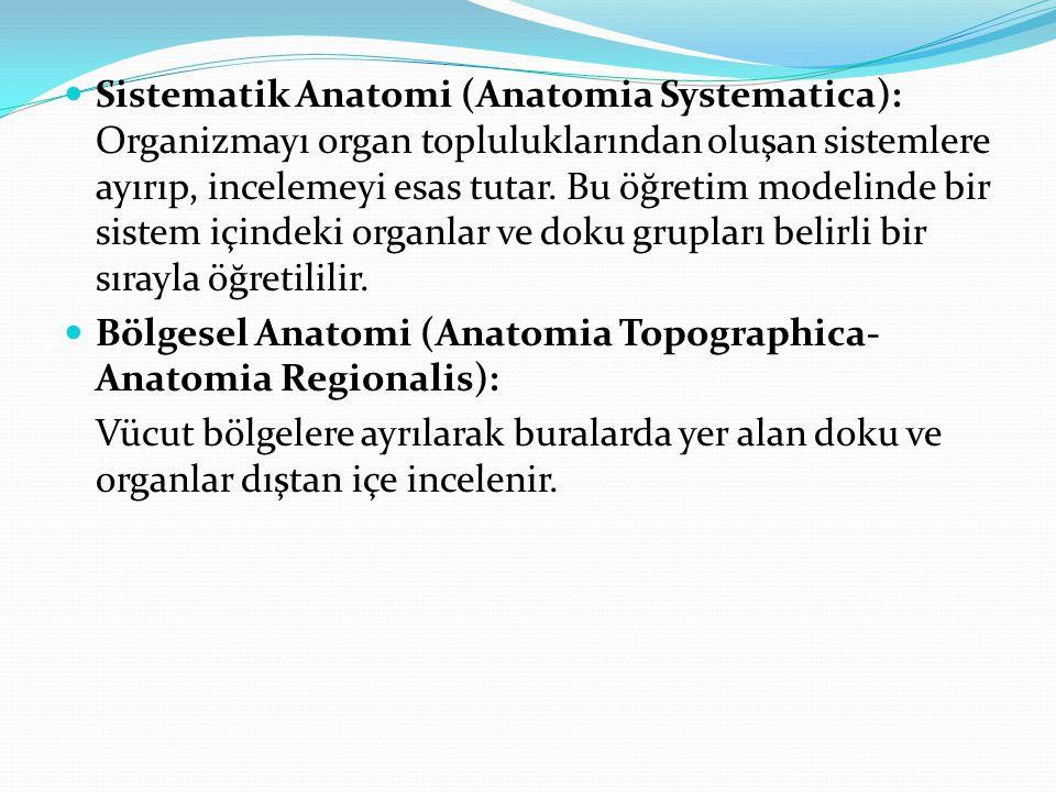 Sistematik Anatomi (Anatomia Systematica): Organizmayı organ topluluklarından oluşan sistemlere ayırıp, incelemeyi esas tutar. Bu öğretim modelinde bi