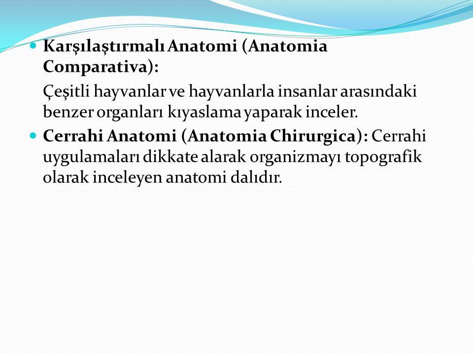 Karşılaştırmalı Anatomi (Anatomia Comparativa): Çeşitli hayvanlar ve hayvanlarla insanlar arasındaki benzer organları kıyaslama yaparak inceler. Cerra