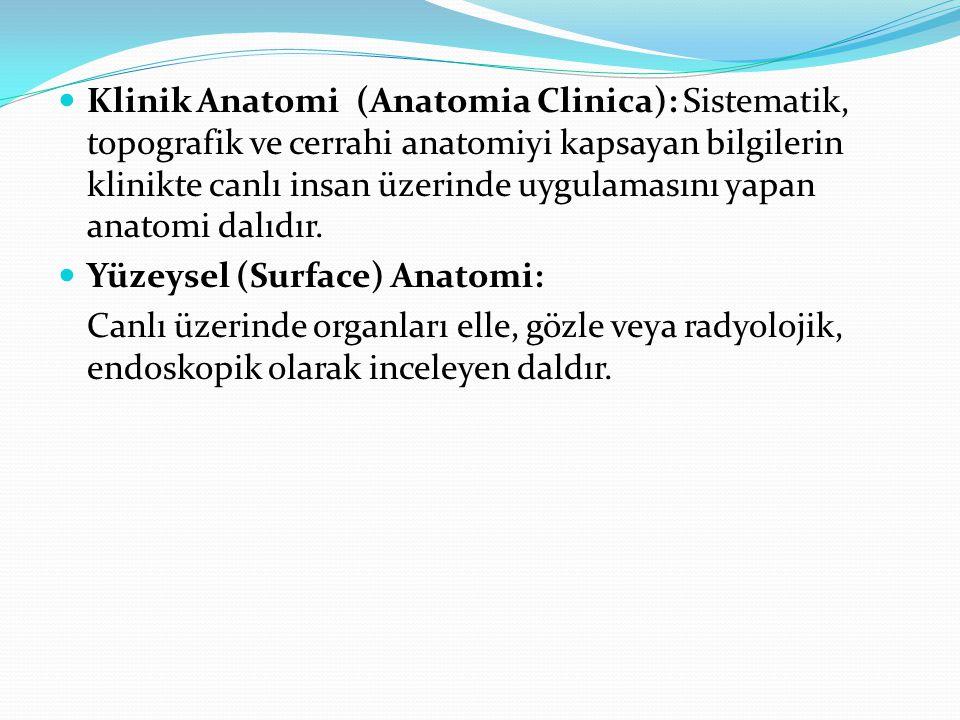 Klinik Anatomi (Anatomia Clinica): Sistematik, topografik ve cerrahi anatomiyi kapsayan bilgilerin klinikte canlı insan üzerinde uygulamasını yapan an