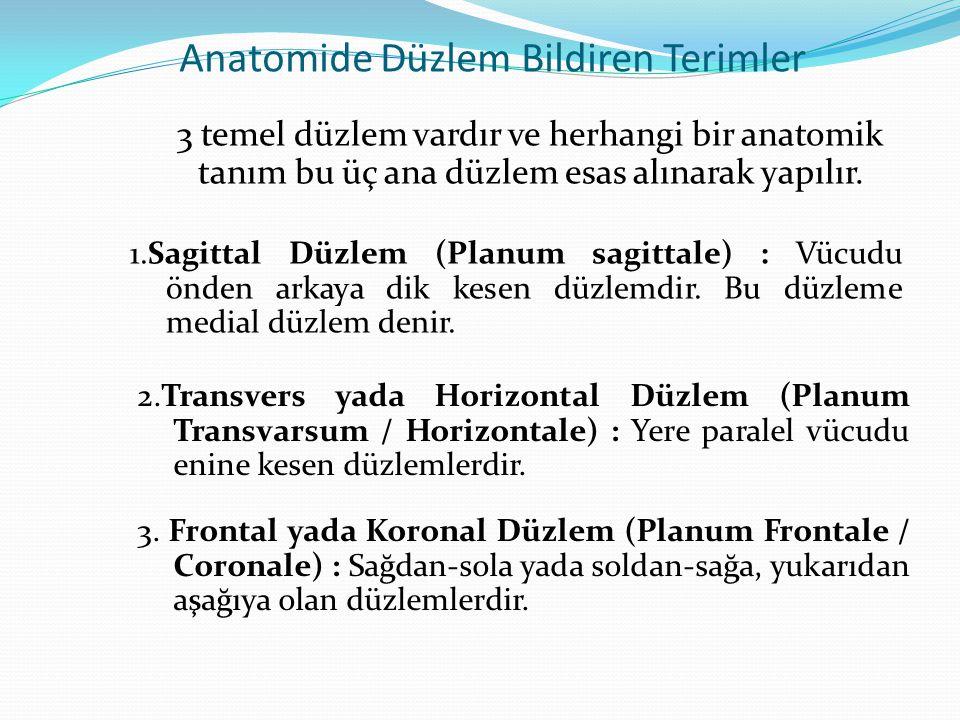 Anatomide Düzlem Bildiren Terimler 3 temel düzlem vardır ve herhangi bir anatomik tanım bu üç ana düzlem esas alınarak yapılır. 1.Sagittal Düzlem (Pla