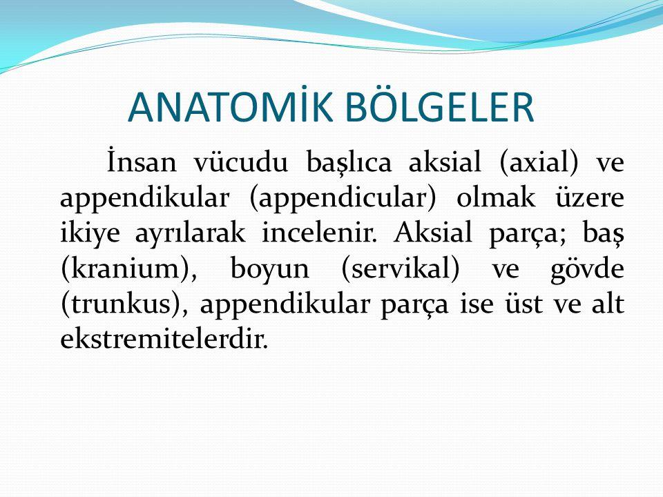 ANATOMİK BÖLGELER İnsan vücudu başlıca aksial (axial) ve appendikular (appendicular) olmak üzere ikiye ayrılarak incelenir. Aksial parça; baş (kranium