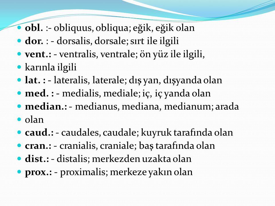 obl. :- obliquus, obliqua; eğik, eğik olan dor. : - dorsalis, dorsale; sırt ile ilgili vent.: - ventralis, ventrale; ön yüz ile ilgili, karınla ilgili