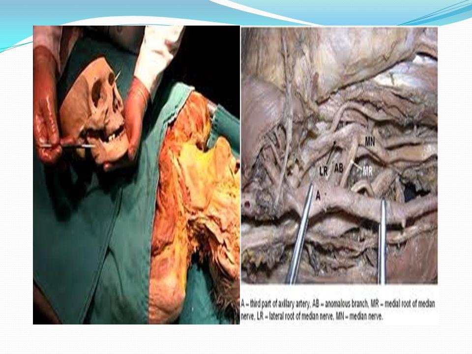 Karşılaştırmalı Anatomi (Anatomia Comparativa): Çeşitli hayvanlar ve hayvanlarla insanlar arasındaki benzer organları kıyaslama yaparak inceler.