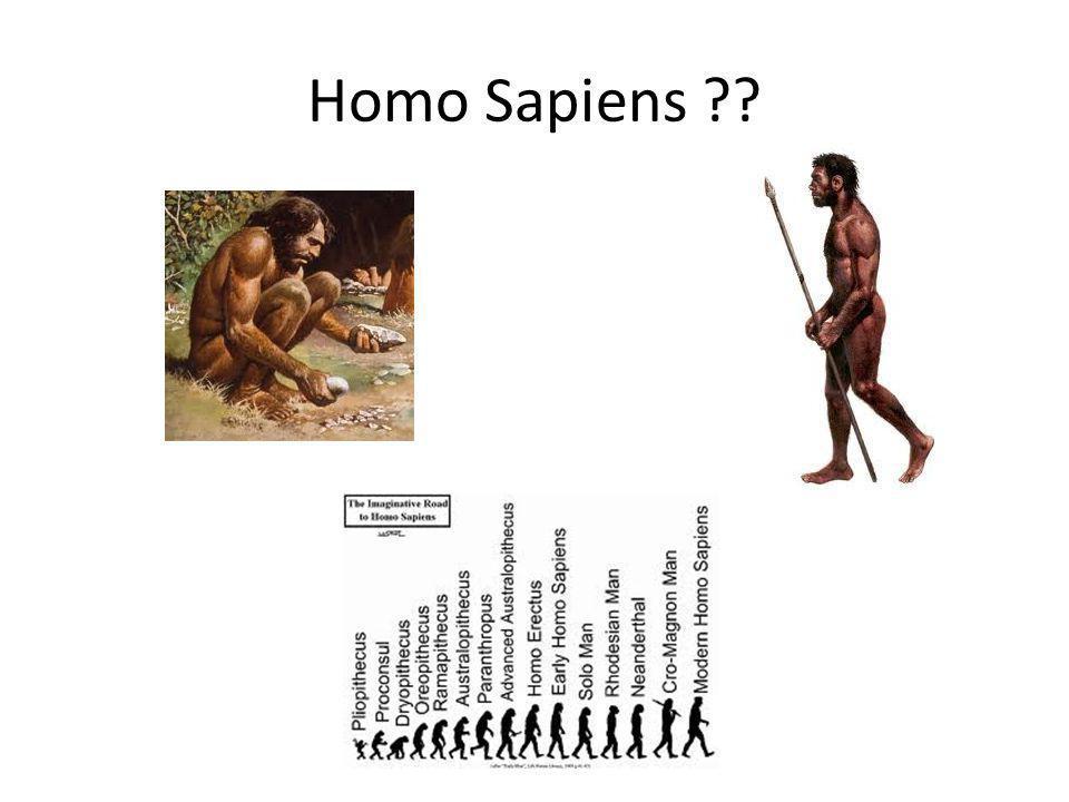 Homo Sapiens ??