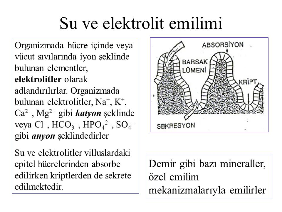 Su ve elektrolit emilimi Organizmada hücre içinde veya vücut sıvılarında iyon şeklinde bulunan elementler, elektrolitler olarak adlandırılırlar. Organ