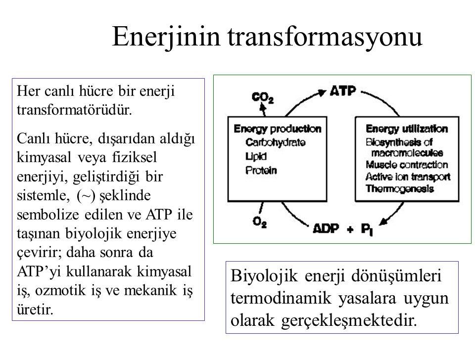 Enerjinin transformasyonu Her canlı hücre bir enerji transformatörüdür. Canlı hücre, dışarıdan aldığı kimyasal veya fiziksel enerjiyi, geliştirdiği bi