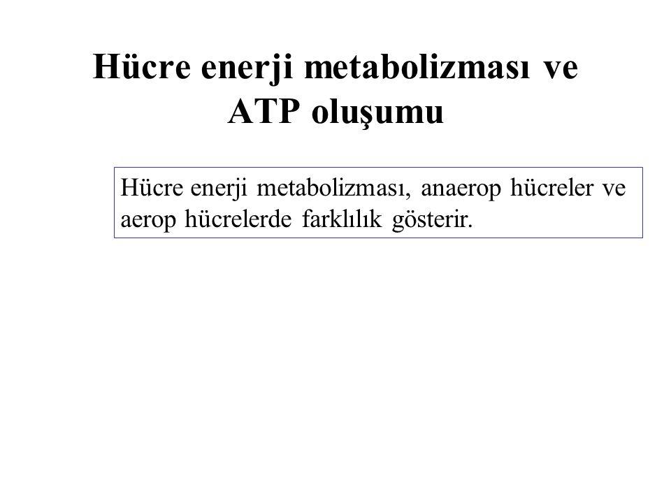 Hücre enerji metabolizması ve ATP oluşumu Hücre enerji metabolizması, anaerop hücreler ve aerop hücrelerde farklılık gösterir.
