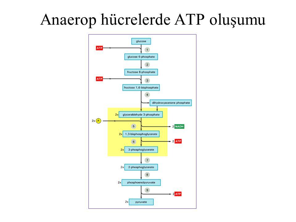 Anaerop hücrelerde ATP oluşumu