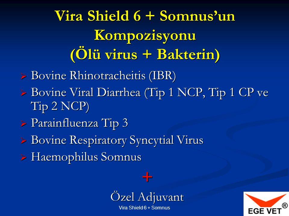 Vira Shield 6 + Somnus'un Kompozisyonu (Ölü virus + Bakterin)  Bovine Rhinotracheitis (IBR)  Bovine Viral Diarrhea (Tip 1 NCP, Tip 1 CP ve Tip 2 NCP)  Parainfluenza Tip 3  Bovine Respiratory Syncytial Virus  Haemophilus Somnus + Özel Adjuvant