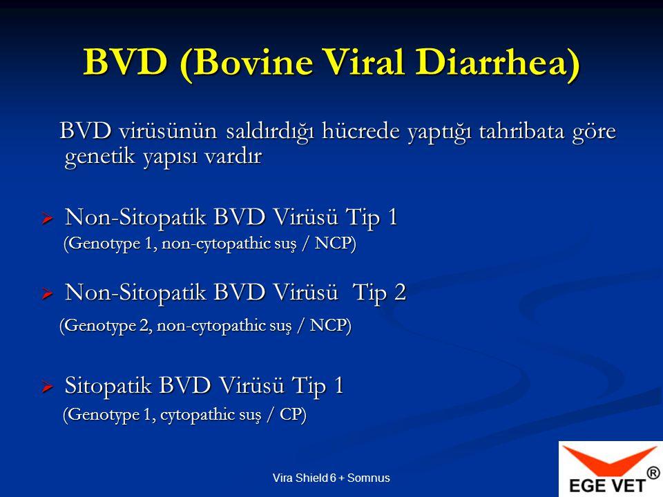 Vira Shield 6 + Somnus BVD (Bovine Viral Diarrhea) BVD virüsünün saldırdığı hücrede yaptığı tahribata göre genetik yapısı vardır BVD virüsünün saldırdığı hücrede yaptığı tahribata göre genetik yapısı vardır  Non-Sitopatik BVD Virüsü Tip 1 (Genotype 1, non-cytopathic suş / NCP) (Genotype 1, non-cytopathic suş / NCP)  Non-Sitopatik BVD Virüsü Tip 2 (Genotype 2, non-cytopathic suş / NCP) (Genotype 2, non-cytopathic suş / NCP)  Sitopatik BVD Virüsü Tip 1 (Genotype 1, cytopathic suş / CP) (Genotype 1, cytopathic suş / CP)