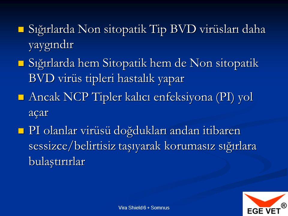 Vira Shield 6 + Somnus İnaktif aşıyı, kuvvetlendirmek için, Ölü virüs + Bakterin + Adjuvant Xtend  Vira Shield 6 + Somnus'un içindeki benzersiz adjuvant Xtend'dir.