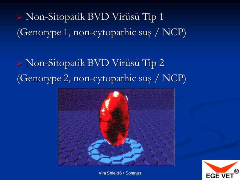 Vira Shield 6 + Somnus Hücreye Bağlı Bağışıklık (Cell Mediated Immunty/CMI) Özel adjuvant sayesinde, Özel adjuvant sayesinde,  Kanda Lenfotik Proliferasyon  Enfekte hücreleri yok eder (sitotoksik yanıt)  Yeterli sayıda bellek hücresi  Bellek hücreleri var oldukça bağışıklık mekanizmaları çalışır