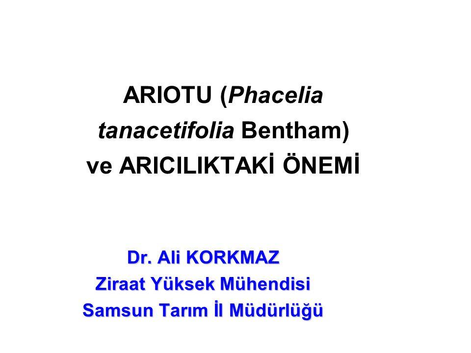 ARIOTU (Phacelia tanacetifolia Bentham) ve ARICILIKTAKİ ÖNEMİ Dr.