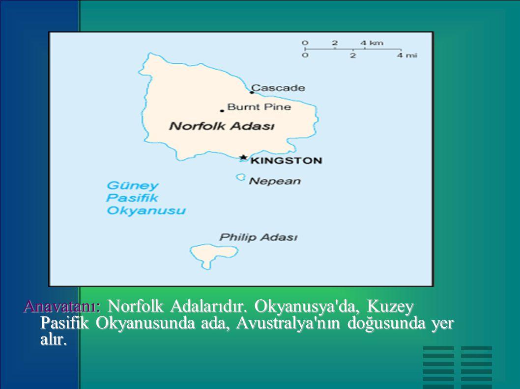 Anavatanı: Norfolk Adalarıdır. Okyanusya'da, Kuzey Pasifik Okyanusunda ada, Avustralya'nın doğusunda yer alır.