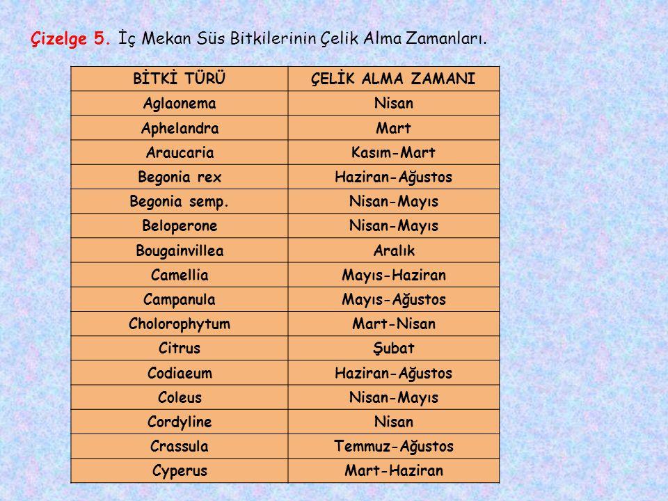 Çizelge 5.İç Mekan Süs Bitkilerinin Çelik Alma Zamanları.