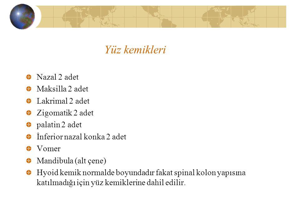 Yüz kemikleri Nazal 2 adet Maksilla 2 adet Lakrimal 2 adet Zigomatik 2 adet palatin 2 adet İnferior nazal konka 2 adet Vomer Mandibula (alt çene) Hyoi