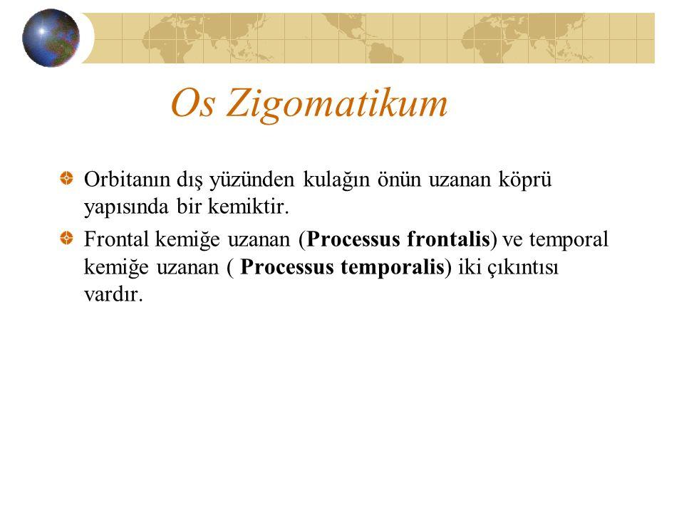 Os Zigomatikum Orbitanın dış yüzünden kulağın önün uzanan köprü yapısında bir kemiktir. Frontal kemiğe uzanan (Processus frontalis) ve temporal kemiğe