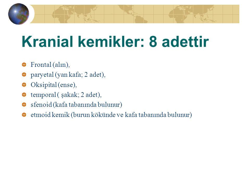 Kranial kemikler: 8 adettir Frontal (alın), paryetal (yan kafa; 2 adet), Oksipital (ense), temporal ( şakak; 2 adet), sfenoid (kafa tabanında bulunur)