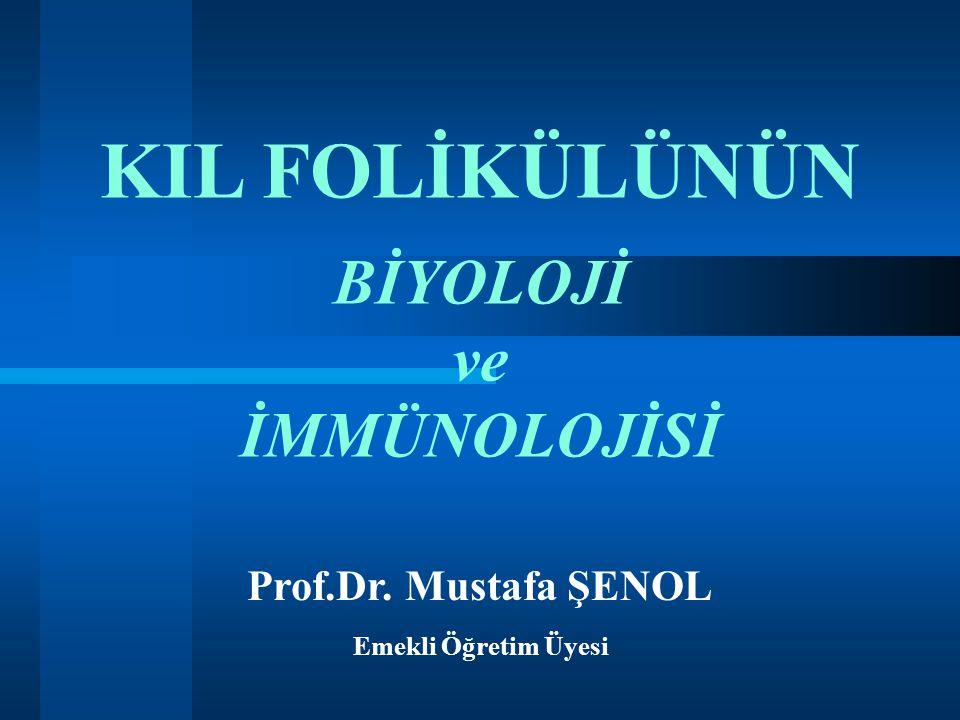 KIL FOLİKÜLÜNÜN BİYOLOJİ ve İMMÜNOLOJİSİ Prof.Dr. Mustafa ŞENOL Emekli Öğretim Üyesi