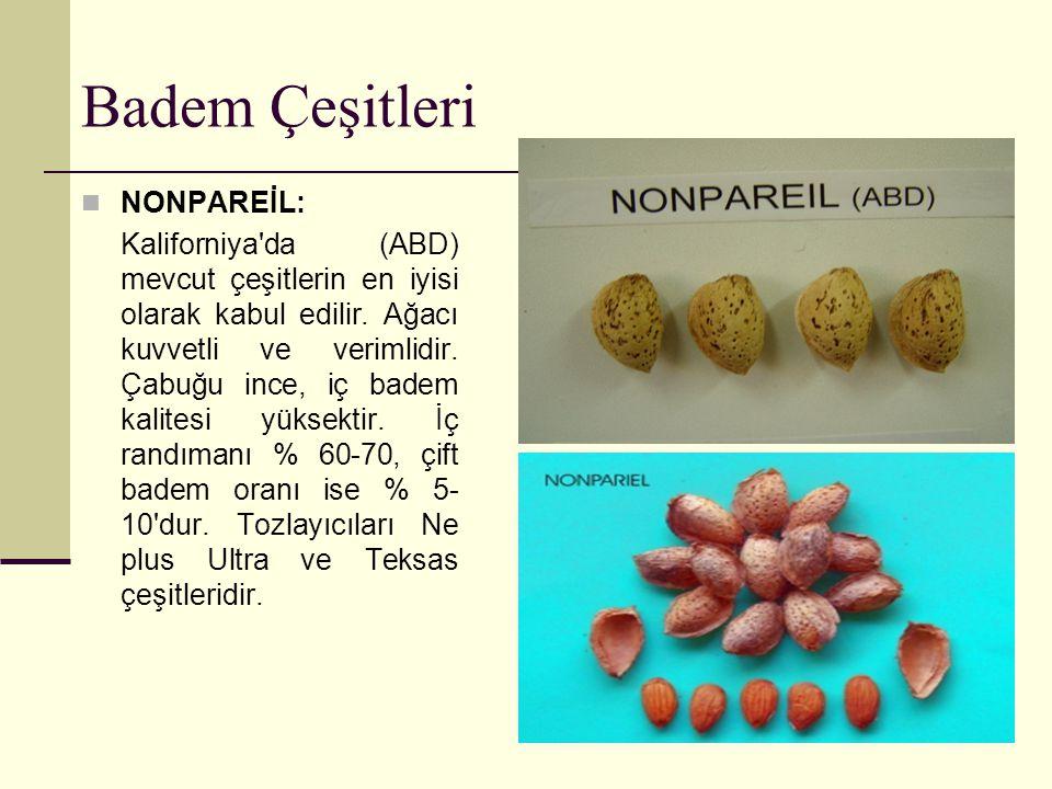 Badem Çeşitleri TEXAS: Kaliforniya da (A.B.D.) yetiştiricilik açısından Nonpareil dan sonra gelir.