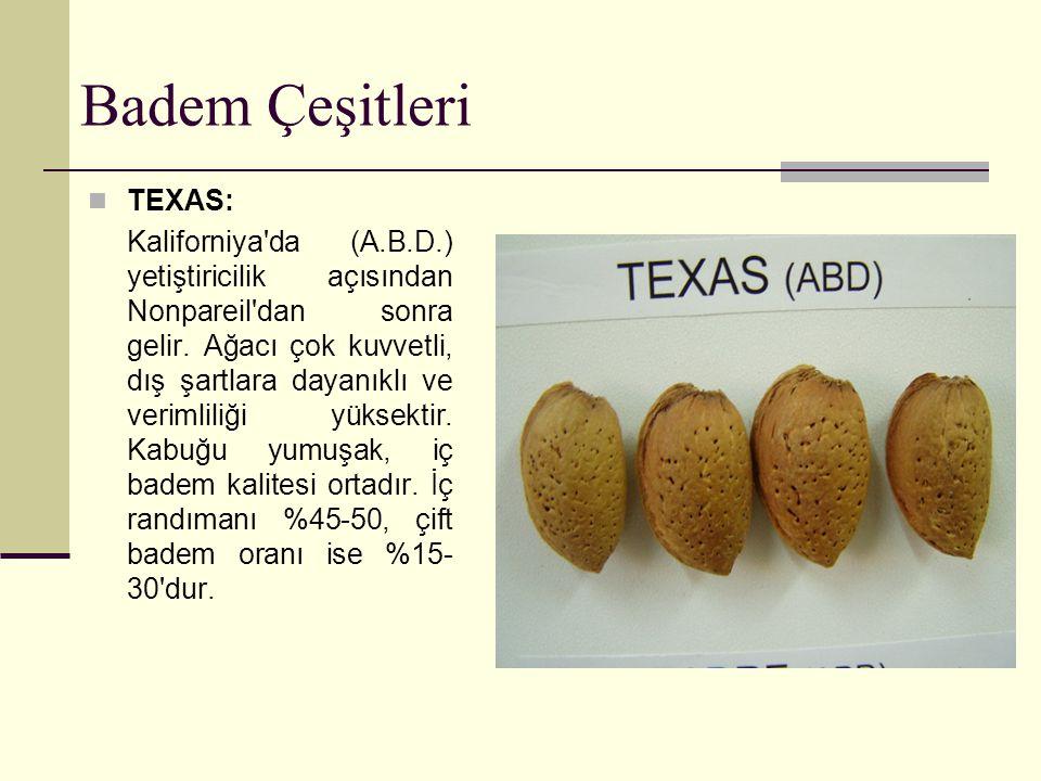 Badem Çeşitleri FERRANGNES : Geç çiçeklenir.İç meyve ağırlığı 1.4 gram dır.Randıma nı %32 dir.
