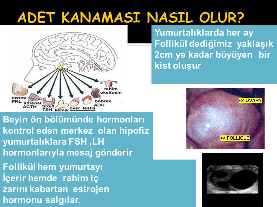 Beyin ön bölümünde hormonları kontrol eden merkez olan hipofiz yumurtalıklara FSH,LH hormonlarıyla mesaj gönderir Yumurtalıklarda her ay Follikül dedi