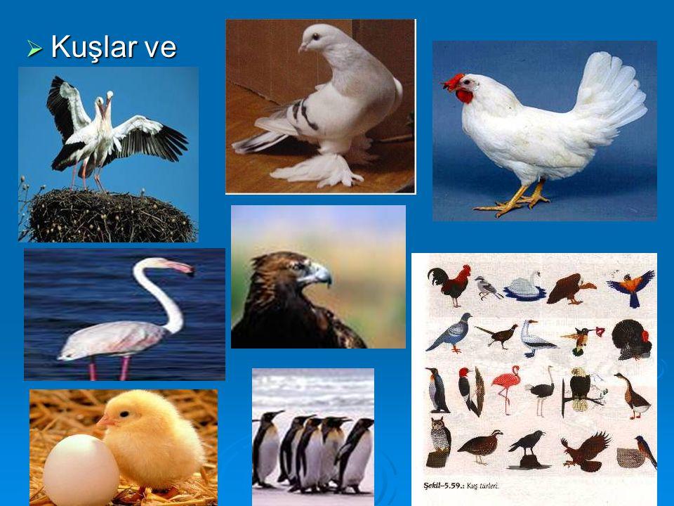  Kuşlar ve