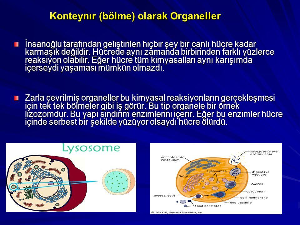 Konteynır (bölme) olarak Organeller İnsanoğlu tarafından geliştirilen hiçbir şey bir canlı hücre kadar karmaşık değildir. Hücrede aynı zamanda birbiri