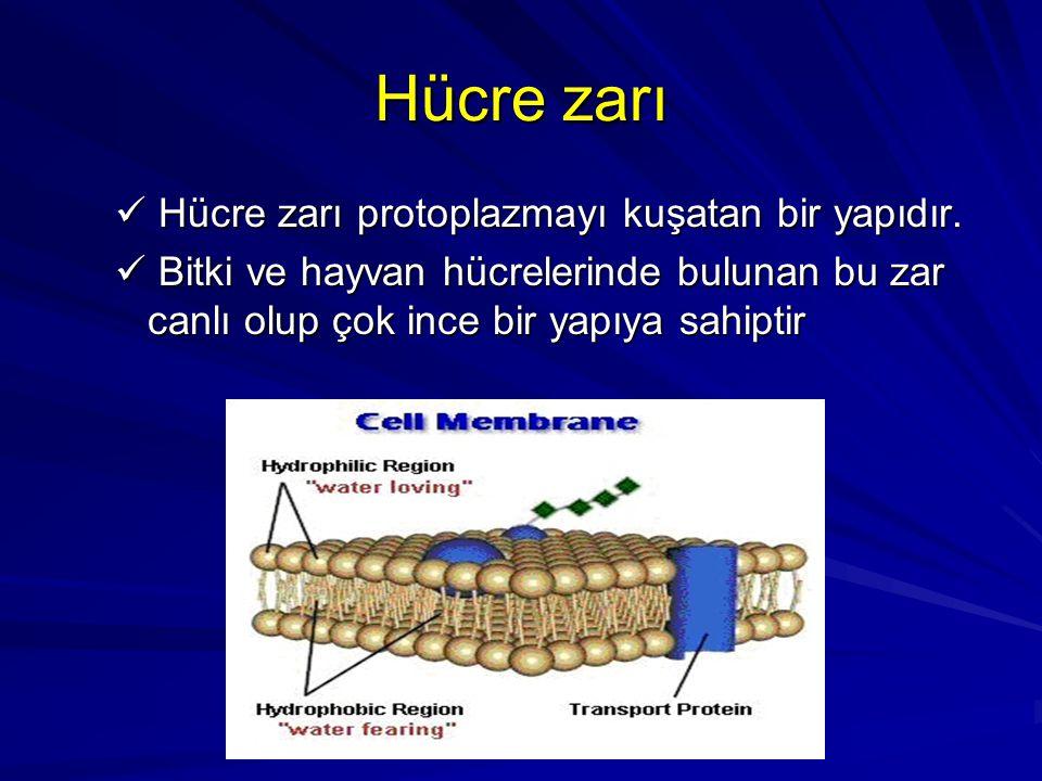 Hücre zarı Hücre zarı protoplazmayı kuşatan bir yapıdır. Hücre zarı protoplazmayı kuşatan bir yapıdır. Bitki ve hayvan hücrelerinde bulunan bu zar can