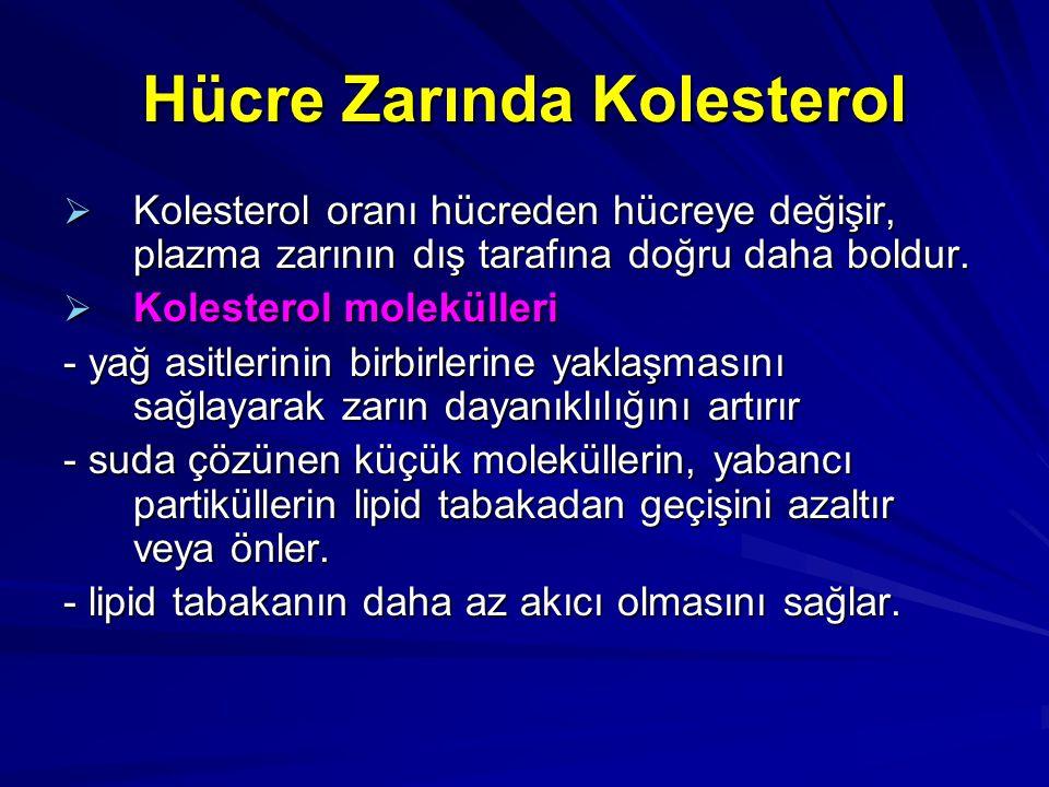 Hücre Zarında Kolesterol  Kolesterol oranı hücreden hücreye değişir, plazma zarının dış tarafına doğru daha boldur.  Kolesterol molekülleri - yağ as