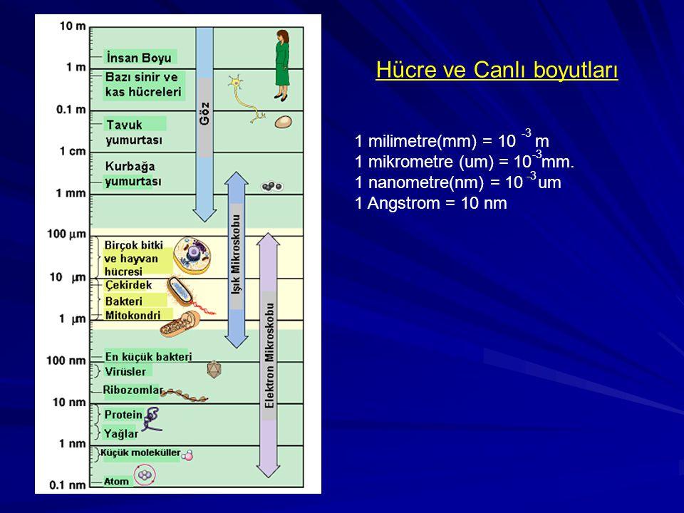 Hücre ve Canlı boyutları 1 milimetre(mm) = 10 m 1 mikrometre (um) = 10 mm. 1 nanometre(nm) = 10 um 1 Angstrom = 10 nm -3