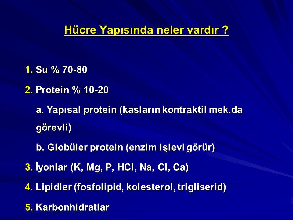 Hücre Yapısında neler vardır ? 1. Su % 70-80 2. Protein % 10-20 a. Yapısal protein (kasların kontraktil mek.da görevli) b. Globüler protein (enzim işl