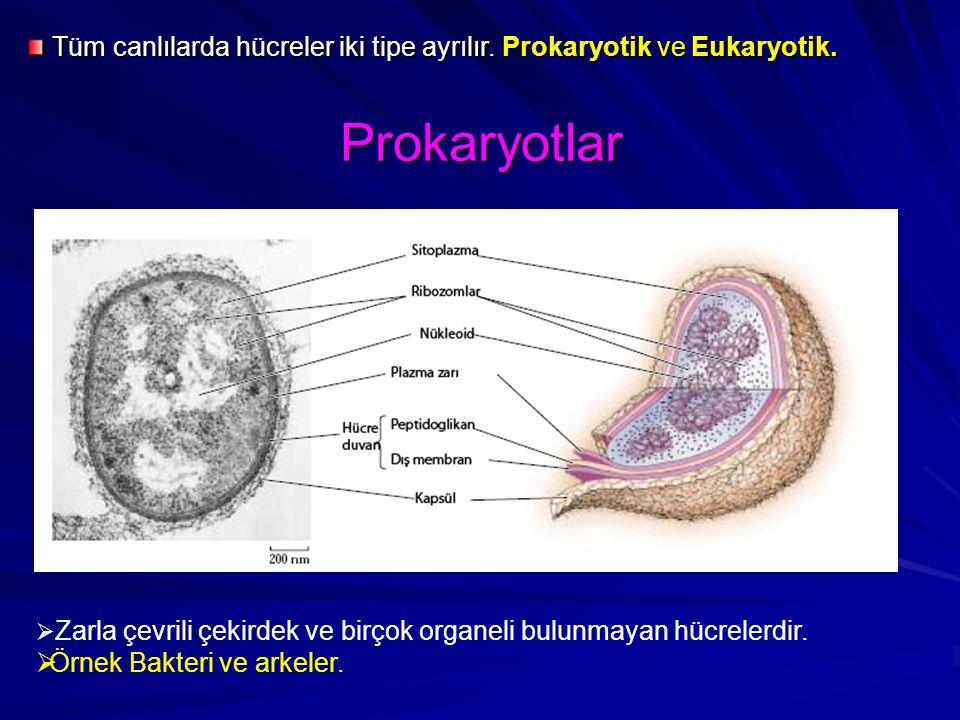 Prokaryotlar  Zarla çevrili çekirdek ve birçok organeli bulunmayan hücrelerdir.  Örnek Bakteri ve arkeler. Tüm canlılarda hücreler iki tipe ayrılır.