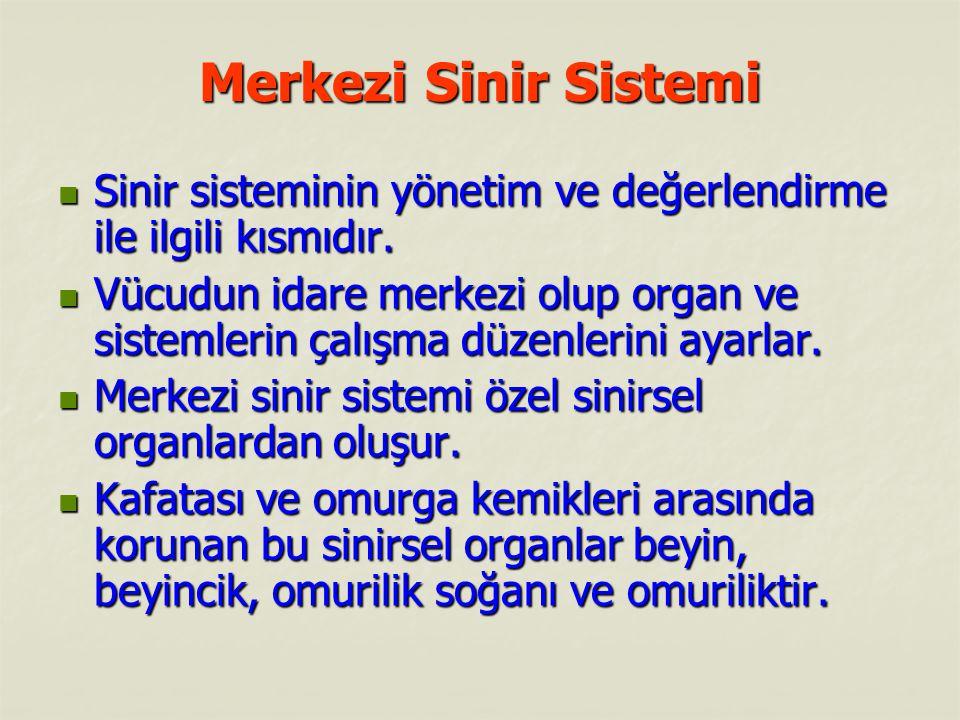 Merkezi Sinir Sistemi Merkezi Sinir Sistemi Sinir sisteminin yönetim ve değerlendirme ile ilgili kısmıdır. Sinir sisteminin yönetim ve değerlendirme i