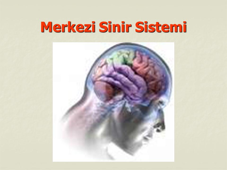 Beyin : Beyin : Merkezi sinir sisteminin en önemli organı olan beyin, kafatası içerisinde bulunur.