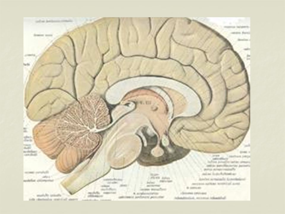 Beynin görevleri arasında; Duyu organlarından gelen bilgilerin değerlendirilmesi, Duyu organlarından gelen bilgilerin değerlendirilmesi, İskelet (kol-bacak) kaslarının çalıştırılması, İskelet (kol-bacak) kaslarının çalıştırılması, Öğrenme, düşünme, hafıza, hayal kurma, Öğrenme, düşünme, hafıza, hayal kurma, Bilgi üretme, problem çözme, konuşma… bulunur.