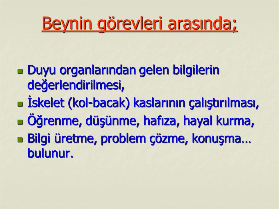 Beyin :