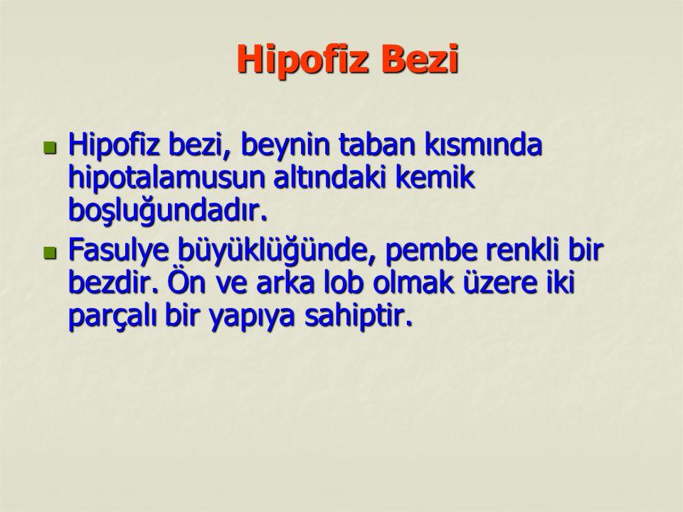 Hipofiz Bezi Hipofiz Bezi Hipofiz bezi, beynin taban kısmında hipotalamusun altındaki kemik boşluğundadır.