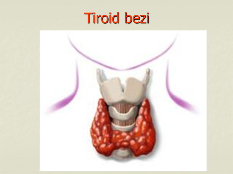 a.Tiroksin Hormonu : Vücut metabolizmasının hızını, büyümeyi ve gelişmeyi etkiler.