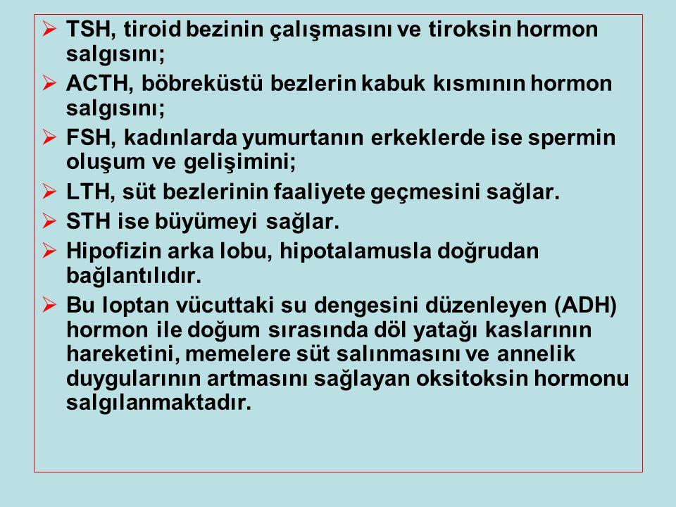 TSH, tiroid bezinin çalışmasını ve tiroksin hormon salgısını;  ACTH, böbreküstü bezlerin kabuk kısmının hormon salgısını;  FSH, kadınlarda yumurta