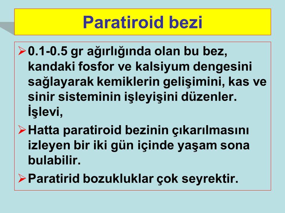 Paratiroid bezi  0.1-0.5 gr ağırlığında olan bu bez, kandaki fosfor ve kalsiyum dengesini sağlayarak kemiklerin gelişimini, kas ve sinir sisteminin i