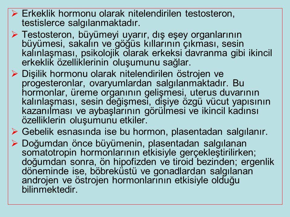  Erkeklik hormonu olarak nitelendirilen testosteron, testislerce salgılanmaktadır.  Testosteron, büyümeyi uyarır, dış eşey organlarının büyümesi, sa